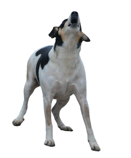 Image of dog howling